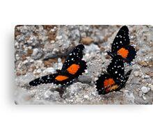 Butterflies - El Salvador Canvas Print