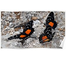 Butterflies - El Salvador Poster
