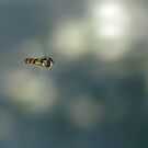 Hoverfly by Lifeware