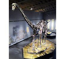 Monstrous Mamenchisaurus Photographic Print