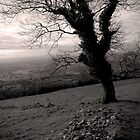 Tree On The Hills by PShellard