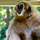 Yelping Gibbon - Wildlife Safari, Winston OR by carls121