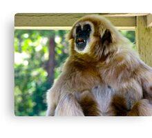 Yelping Gibbon - Wildlife Safari, Winston OR Canvas Print