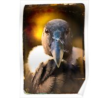 "Smile and say ""Carrion"". Andean Condor Portrait Poster"