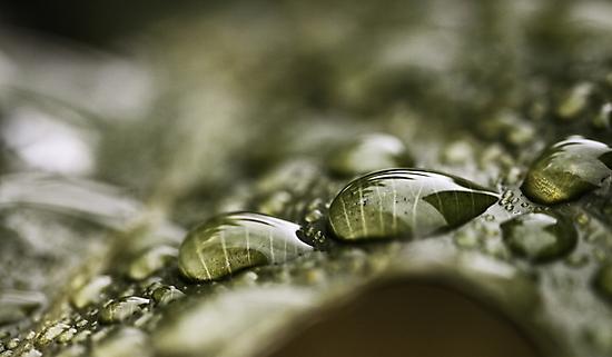 Raindrops On A Leaf by Evita