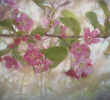 Pretty Pink Blossoms by vigor