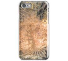 Lacey Scorpionfish iPhone Case/Skin