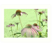 Cone Flowers No. 1 Art Print