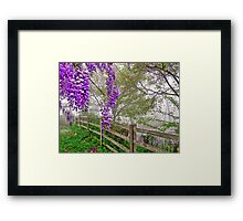 Wisteria and the Mist Framed Print