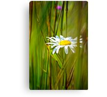White Flower in the brush Canvas Print