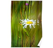 White Flower in the brush Poster