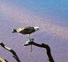 Successful Fishing by byronbackyard