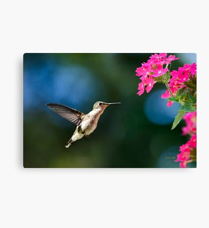 Humming bird with Pink Flowers Canvas Print