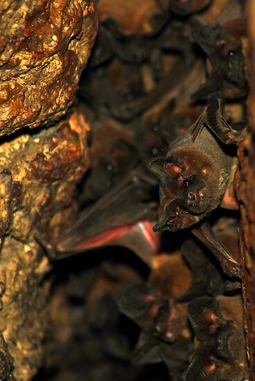 Bat Cave - Brazil by Jason Weigner
