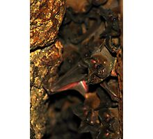 Bat Cave - Brazil Photographic Print