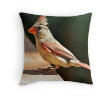 Female northern cardinal in the morning sun Throw Pillow