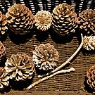 The Art of Pine Cones by Caren