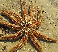 Starfish by Kerry  Hill