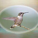 Hummingbird Gazing by Bonnie T.  Barry