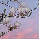 Magnolia Sunset Dreams  by Callie Carling