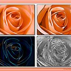Quadraphonic Rose by David's Photoshop