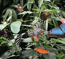 Jungle of Butterfly's by louise335