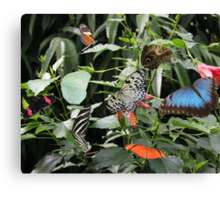 Jungle of Butterfly's Canvas Print