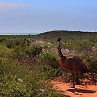 The Indian Ocean, Wildflowers and an Emu by myraj
