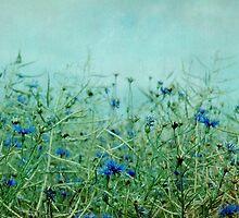 cornflowers by Iris Lehnhardt