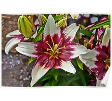 Tiny Padhye Asiatic Lily Poster