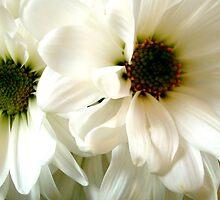 Deux Fleurs ^ by ctheworld