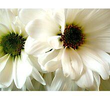Deux Fleurs ^ Photographic Print