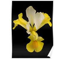 Yellow Flower Bloomed Poster
