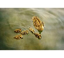 mother and her ducklings Photographic Print