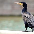 The Great Cormorant  by MWhitham