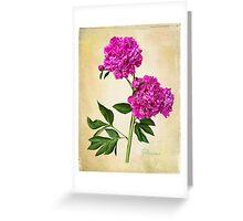 Pivoine  Greeting Card