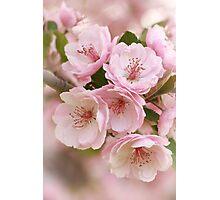Crabapple Blooms II Photographic Print