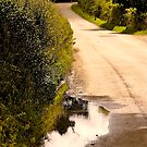 Road to Fairmile.. by Mike  Waldron