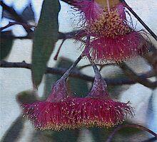 Aussie Beauties by Linda Lees