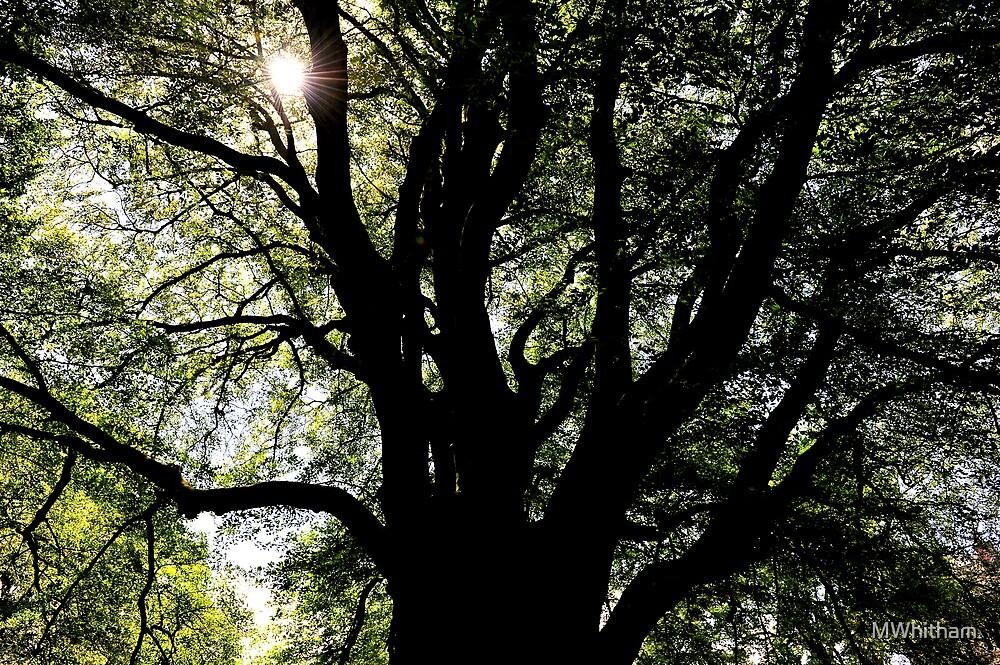 Tree light by MWhitham