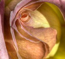 Secretive Rose by Mandy Brown