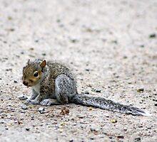 squirrel in the road by liza scott