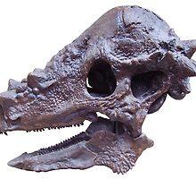 Beautiful Pachycephalosaurus by skeletonsrus