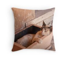 Cat in a box Throw Pillow