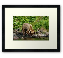 Sly One Framed Print