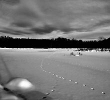 """ Frozen Pond - 3 Rivers WMA, New York "" by DeucePhotog"