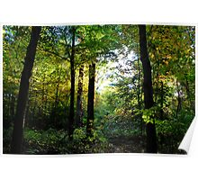 """"""" Camillus Forest - Upstate NY """" Poster"""