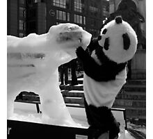 panda meets ice polar bear Photographic Print