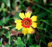Hippie Flower - Omega - 7-10 by denisespictures