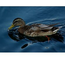 Ducking Out And Leaving Photographic Print